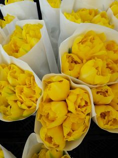 My favorite spring hobby is photographing yellow flowers. Green Market, Union Square NYC