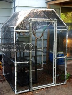 Just need to add some plants to it and it'll be ready for the herd. The nice thing is, it is completely water. Diy Cat Enclosure, Outdoor Cat Enclosure, Reptile Enclosure, Chameleon Enclosure, Reptile Room, Reptile Cage, Munchkin Cat Scottish Fold, Bird Aviary, Butterfly House