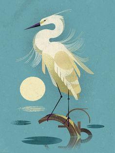 Little Egret - Dieter Braun