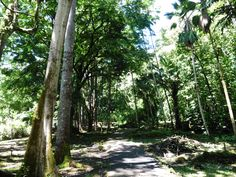 Maui, Hawaii. Ke'anae Arboretum on the Hana Highway. Beautiful trees which are marked with name plates.