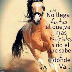 #frases #caballos #equitacion #equestrian #horses #rider