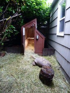 Tortoise House