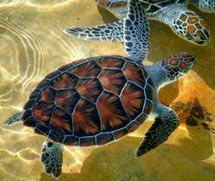 Eclectically Mine To Share — (via Sea Turtles Underwater Animals, Underwater Creatures, Ocean Creatures, Baby Sea Turtles, Cute Turtles, Animals And Pets, Baby Animals, Cute Animals, Tortoise Turtle