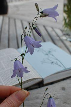 """Képtalálat a következőre: """"wild bluebell flower tattoo"""""""