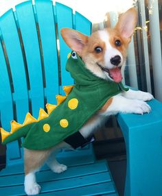 Sneak peek of the new Jurassic movie. (Photo @taco.the.corgi ) Halloween posts all month long! Tag me in your cutest costume pics to be featured!