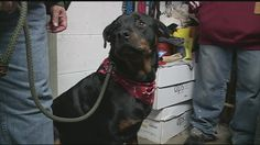 Owners of a Swanzey dog shelter are trying to rebuild after a fire burned down their barn.