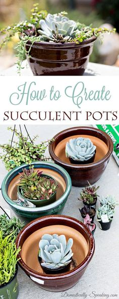 How to Create Your Own Succulent Planter Pots - Succulents are awesome - if you give them a good start they are easy to maintain.