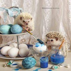 Hedgehog Pet Cage, Happy Hedgehog, Hedgehog Art, Cute Hedgehog, Cute Baby Cow, Baby Cows, Cute Babies, Dog Pictures, Animal Pictures