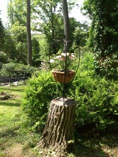 Ways to make use of tree stump: You can gut 'em, convert into natural planter, opt for a silly gnome home (no thxs) or try my idea: Simply set a plant stand of choice on top of stump.  Secure legs to stump w/ brackets (nothing perm so you can dismantle for winter). This ensures the stand won't blow over in rough weather.  Pop in your plants & enjoy!