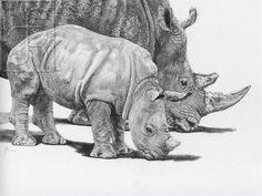 ' LISTEN ' rhino mother & calf drawing by Julia Ruffles