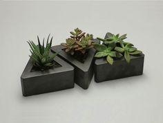 succulente vasi cemento