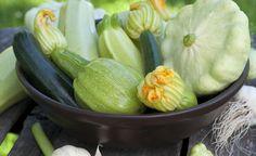 Eine Zucchini-Pflanze liefert pro Woche bis zu fünf Früchte. Die Ernte beginnt im Juni und endet erst im Herbst. Für Abwechslung sorgen Sorten mit ungewöhnlichen Formen und Farben.