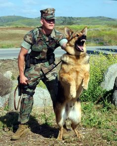 Today is K9 Veteran's Day. March 13, 1942 is the official birthday of the United States K9 Corps. We honor not only those in the K9 Corps, but also SAR Dogs, Police K9s, Customs K9s, Border Patrol K9s, Airport Police K9s and other working dogs that protect us every day. They serve to save and they deserve to be honored, recognized and remembered- ♥