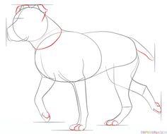 How to draw a pitbull step by step. Drawing tutorials for kids and beginners.