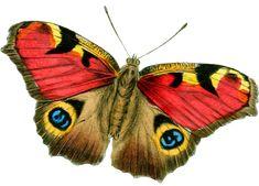 Obsahuje motýle, motýlie polovice, tiene motýľov, obrysy motýľov, ďalšie logické motýlie hádanky a  životný cyklus motýľa