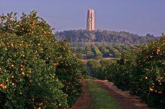 Bok Tower from nearby Vineyards, photo courtesy, Bok Tower Gardens - Highest natural elevation in Florida