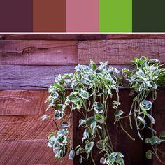 《Planter Palette》