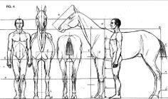 Man and horse Anatomy Drawing, Anatomy Art, Horse Sculpture, Animal Sculptures, Horse Drawings, Animal Drawings, Anatomy Reference, Art Reference, Peacock Wall Art