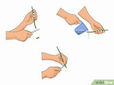 How to Propagate Bougainvillea. Raising a garden full of woody, bright-bloomed bougainvillea only requires a single plant. Simply cut from the stem of an existing plant, coat the end in rooting hormone, and stick it in a shallow container. Plant Cuttings, Propagation, Bougainvillea Tree, Hibiscus Plant, Free Plants, My Secret Garden, Front Yard Landscaping, Tropical Plants, Garden Projects