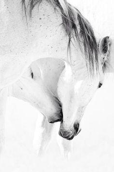 pure, pristine, intimacy, spontaneously.