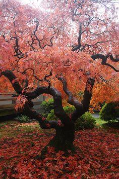 Autumn Portland Japanese Gardens, Oregon