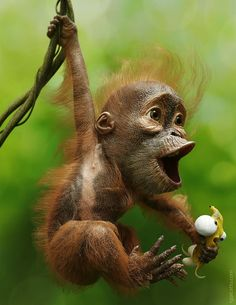 BY: Igor Catto.......... Little_Monkey........Click on image to enlarge.....