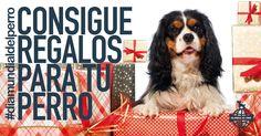 Conseguir regalos para tu perro. ¡Acepta mi invitación! #diamundialdelperro https://a.cstmapp.com/p/15282?uid=618258634&lc=es-es