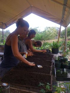I had the pleasure of WWOOFing on three organic farms, two being on the Big Island (Hawaii Island) and one on Maui over a period of three and a half months. Each of my experiences with WWOOF were very different but they were all wonderful learning experiences and full of adventure