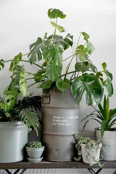 a home in the netherlands #houseplantsdisplay