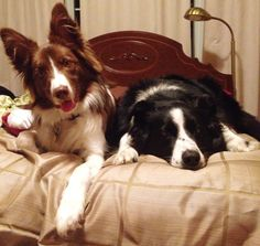 Molly & Seth but could be our Olli and Ruddles. the likeness and pose is uncanny