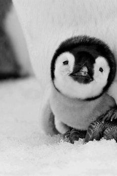 Baby penguin needs a hug.