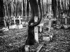 Tree hugs a grave Photography Gallery, Street Photography, Art Photography, Tourist Places, Female Photographers, Documentary Photography, Photojournalism, Photographic Prints, Cemetery