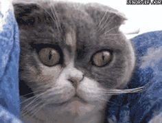 21 gatos que não aturam certas coisas