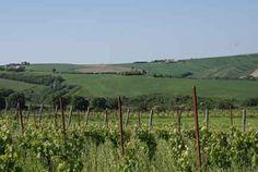 Biodynamic vineyards in Valle Esina | Pievalta Castelli di Jesi