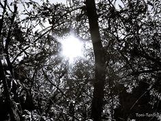 Rayos entre las ramas