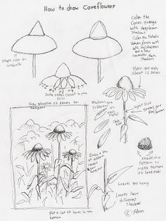 Adron's Art Lesson Plans: How to Draw Cone Flowers Art Lesson For Young Arti...