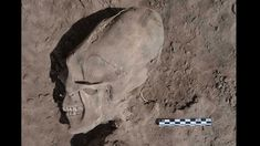 Ancient, deformed skulls fuel 'alien' theories: Archaeologists digging near Mexico's Sonora desert have discovered what appears to be the burial ground of an early Mesoamerican society, including signs of deformed skulls.