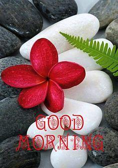 Gd Morning, Good Morning Coffee, Good Morning Photos, Good Morning World, Good Morning Greetings, Good Morning Good Night, Good Morning Wishes, House Plants Decor, Plant Decor