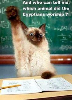 And who can tell me, which animal did the Egyptians worship?