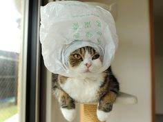 Maru!  -- my favorite kitty strikes again ;o)