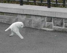 Googleストリートビューが激写した「二本足のネコ」のGIF画像が妖怪ちっく/白ネコさんがトコトコと直立歩行