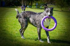 """Tossing these rings around the property is a daily exercise that our dogs love, and we love it, because our dogs get plenty of exercise year around."" - Kimberly Gauthier"