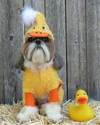 Un pato?