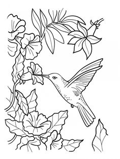 Get these free printable Hummingbird Coloring Pages only at EverFreeColoring.com. Express yourself and have fun with these Animals coloring printables.