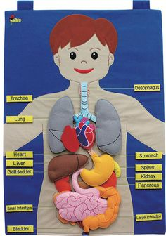 Large fabric wallchart of the human body with 15 attachable body pieces and 13 name labels. The chart comes with an information booklet for teachers and parents. Size : 50 x 70 cms Age : 3 years +. Not suitable for under 3 years - small parts. Science Projects For Kids, Science Experiments Kids, Science For Kids, Science Activities, Toddler Activities, Human Body Science, Human Body Activities, Human Body Crafts, Human Body Organs