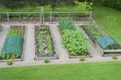 This is the eastern half of our eight bed vegetable garden, shown at the end of June. Here is a link to a photo showing the other half of the garden. www.distanthillgardens.org