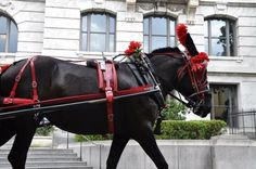 Special thanks to Prince Charles-Philippe Marie Louis of Orléans Duke of Anjou for choosing to ride with Royal Carriages while in New Orleans.  Carriage Driver Fiona and carriage mule Chicory provided a comfortable ride for eight royal dignitaries today. What a special honor it is for us to provide such services!  French Quarter Business Association #NewOrleans #FrenchQuarter #French #VivaLaFrance #Merci  You too can experience something oh so similar! Just head on over to…