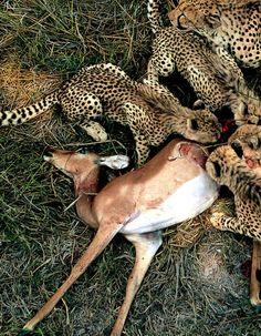 Cadena Alimencia - Naturaleza Muerta - Depredadores