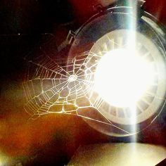 When Phil sets up camp directly over one of my spotlights at work #philspiderman #arachnid #spiderweb