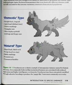 Poochyena types- Pokemon Biology Textbook!I wish this was a real book
